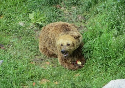 Bansko bear sanctuary.