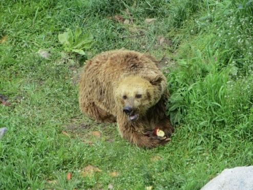 Bansko bear sanctuary.